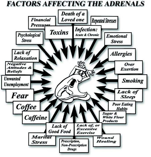 factors-affecting-adrenals