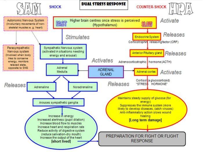 dual-stress-response-chart