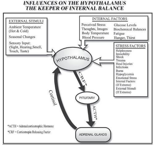 influencers-on-hypothalamus